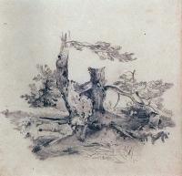Сосны, прилегающие к корню части стволов. 1854
