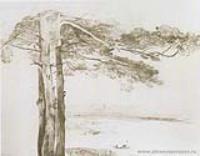 Сосна из Гусарова. 1850-е