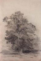 Дубы. 1854