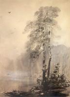 Сосны на берегу озера. 1880