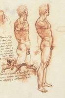 Анатомический рисунок сангиной