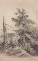 Ель. 1850-е